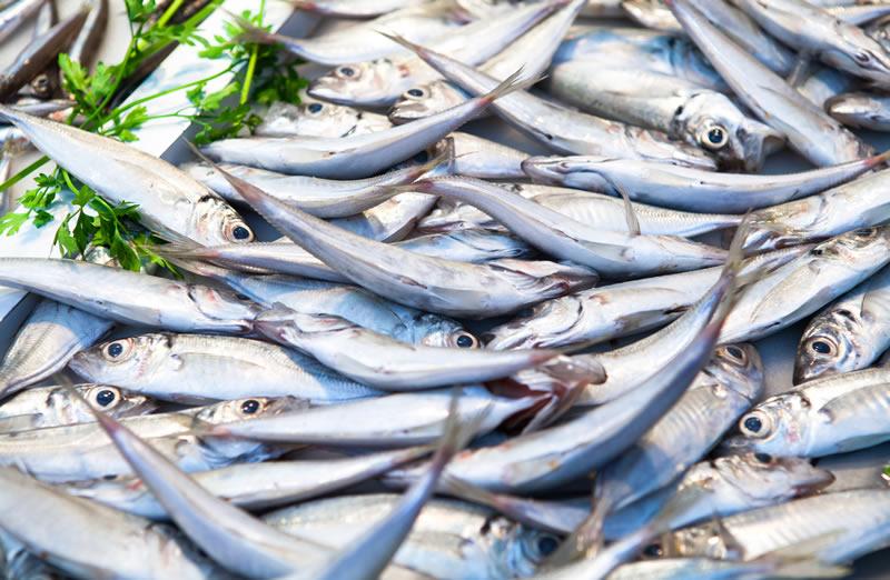 Análisis de productos de la pesca