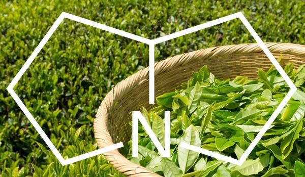 Alcaloides de Pirrolizidina en el té, infusiones de hierbas y suplementos alimenticios