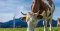 Dioxinas y PCB's: La EFSA reevalúa el nivel de ingesta tolerable